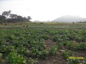 Mongomo Farm